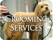 Calgary Dog Groomer - Services